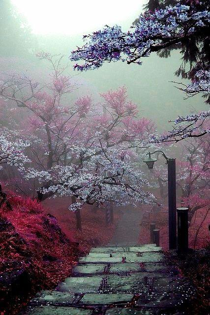 Árboles de cerezo
